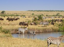 Ultimate Africa Tour Experience